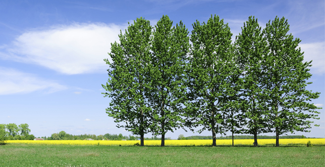 Greenhouse gas offsetting - line of trees