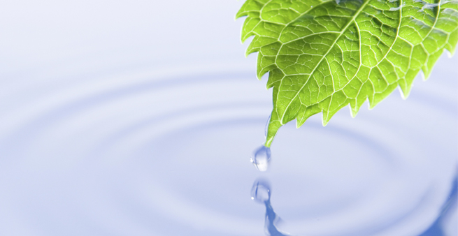 Water management-leaf water drop